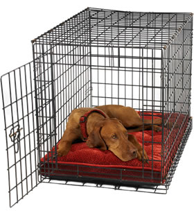 Crate Training – Tips and Guidelines