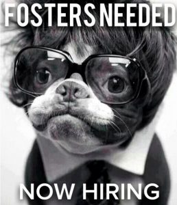 dog-fosters