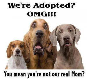 adoption-dogs