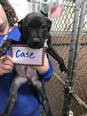 Case (NY-Leah)